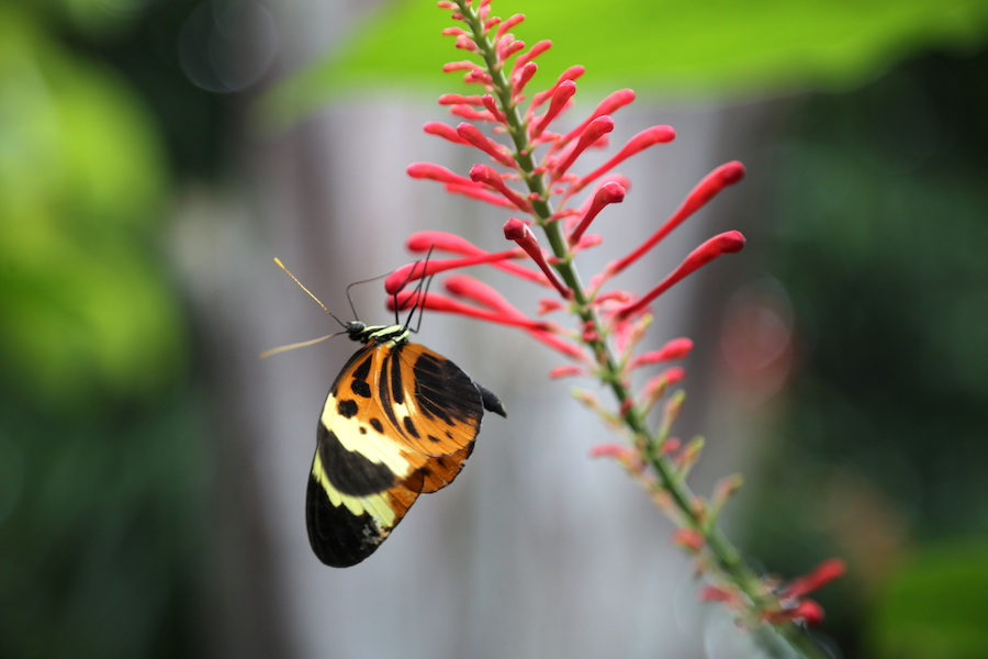 Butterfly Conservatory | Florida Keys Islands Bucket List: Best Things to do in Key West & Beyond