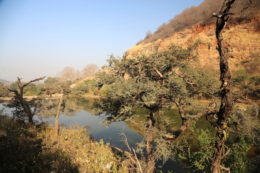 Ranthambore National Park: Palace on Wheels: What to Expect From Luxury Train Travel in India