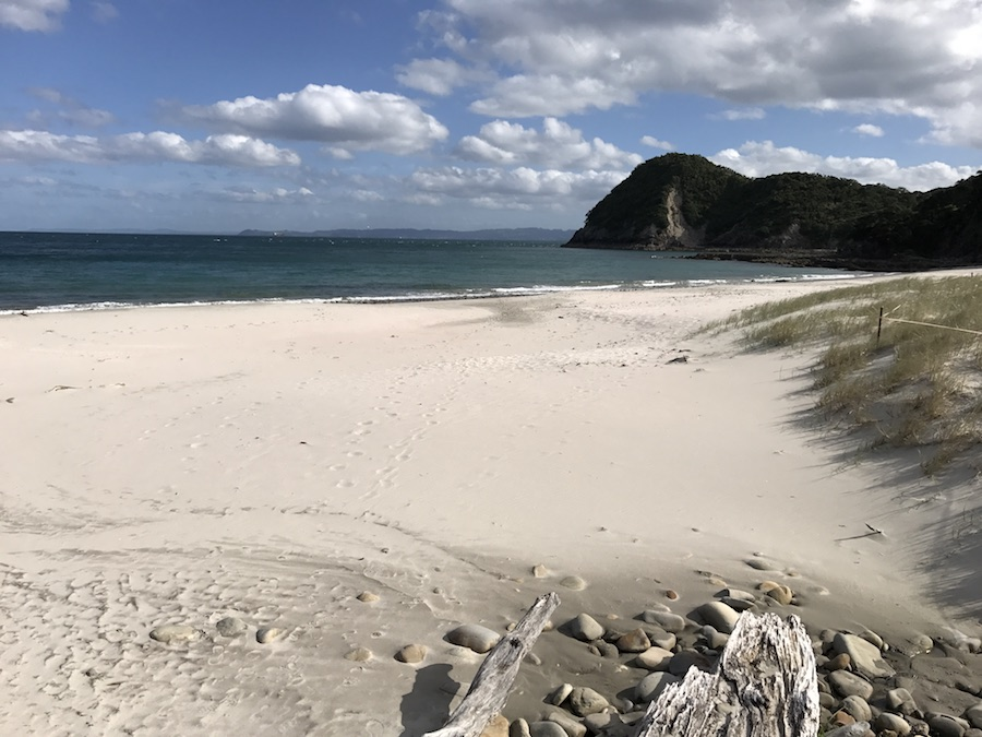 New Zealand Adventure: A Road Trip on the North and South Islands: Smuggler's Bay Beach