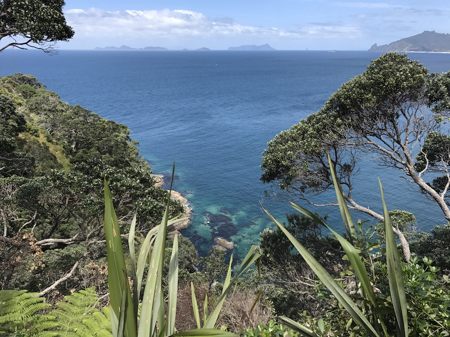 New Zealand Adventure: A Road Trip on the North and South Islands Roa Glasshouse View