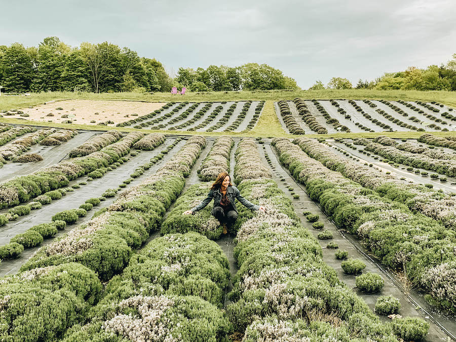 Lavender Farm: Petoskey Bucket List: Things to Do in Northern Michigan