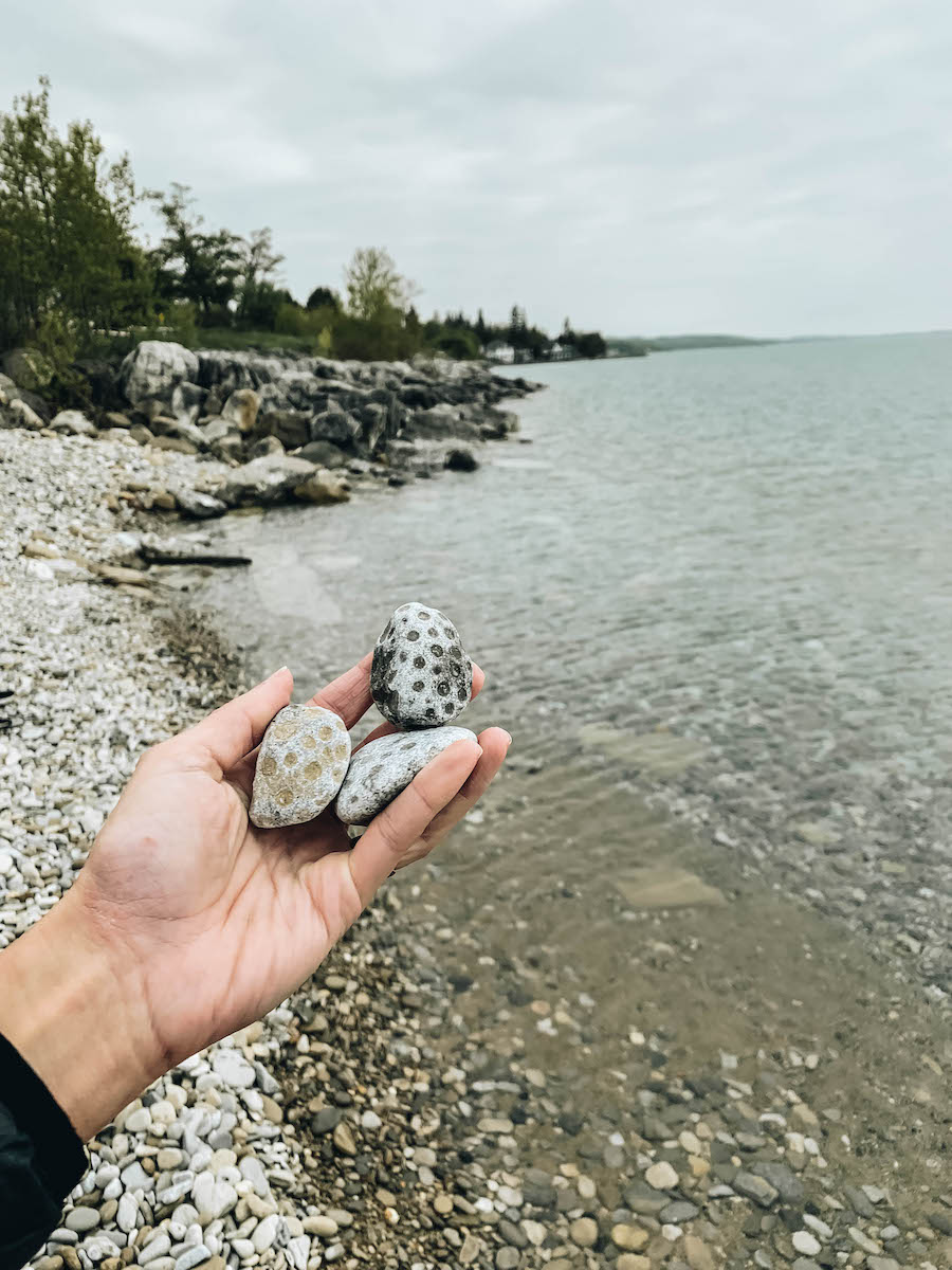 Hunting for Petoskey Stones in Michigan