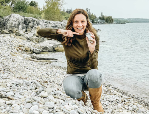 Petoskey Stones: Hunting for the Healing Rocks of Michigan