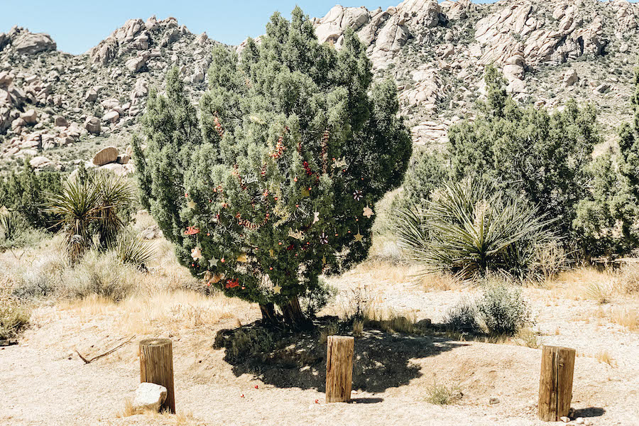 Christmas Tree Pass: Leaving Las Vegas: Southern Nevada Day Trips to the Outdoors