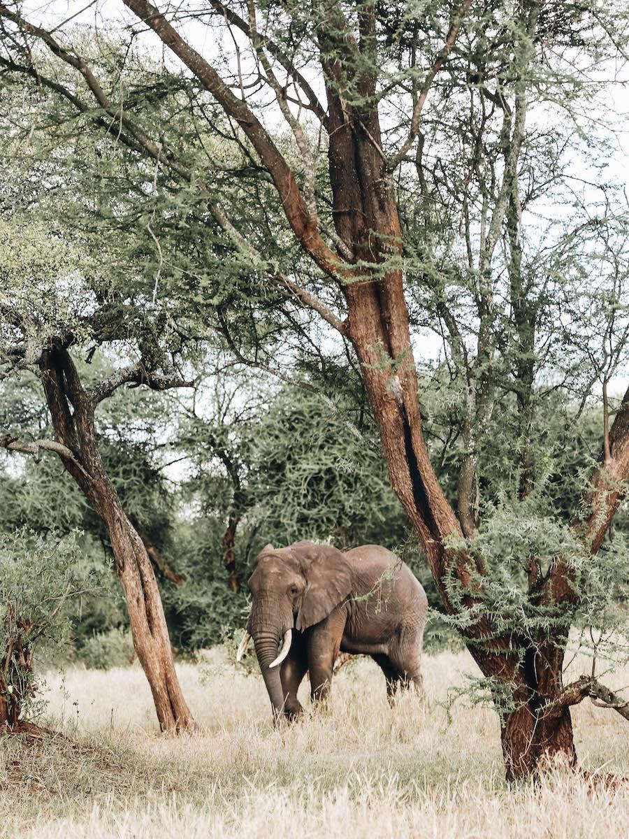 Tarangire National Park in Tanzania