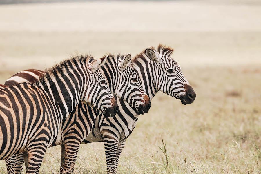 ngorongoro crater in Tanzania Africa