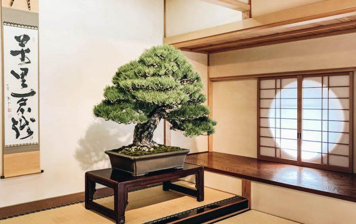 Omiya Bonsai Art Museum in Saitama Prefecture