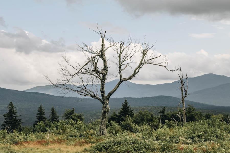Views of Rangeley