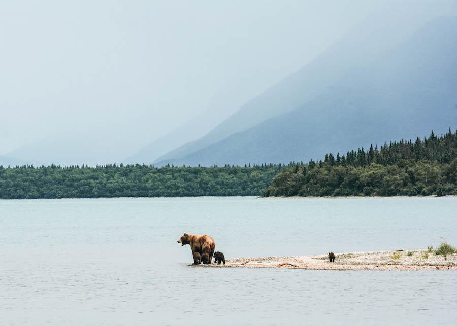 Parc national de Katmai