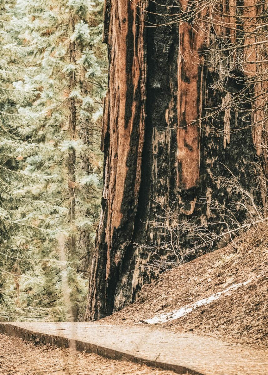 US Park List: Redwood National Park